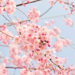 当管理人オススメ!春に聴きたくなる曲4選!